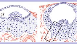 反复胚胎移植失败系列之三:生化妊娠